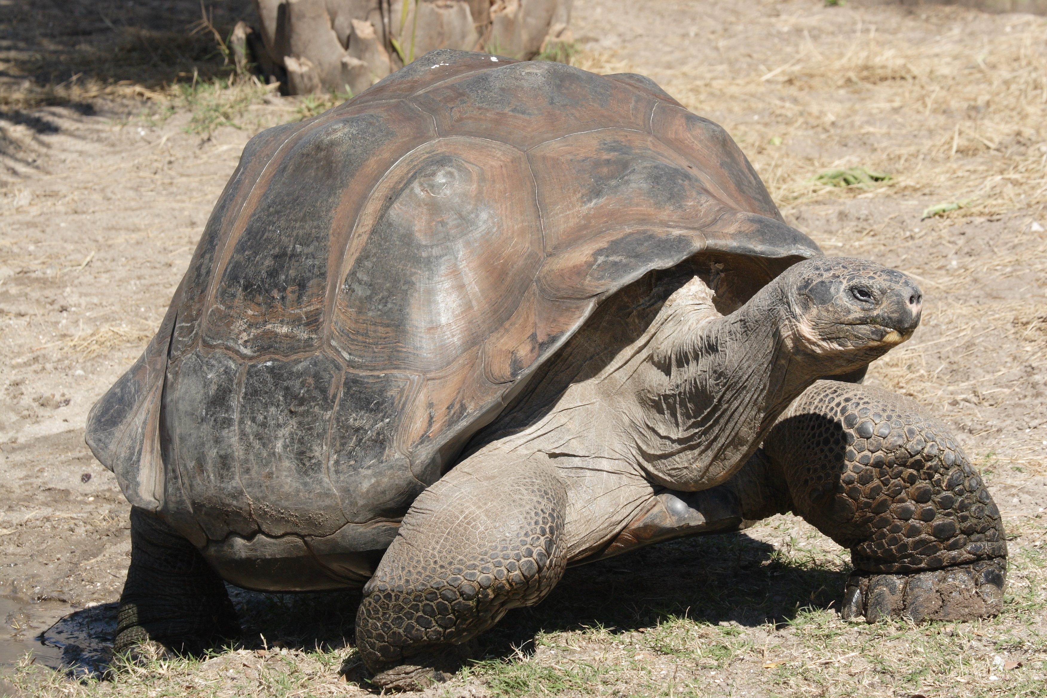 Gay Orthodox Tortoises (Yeah! That title should do the trick!)